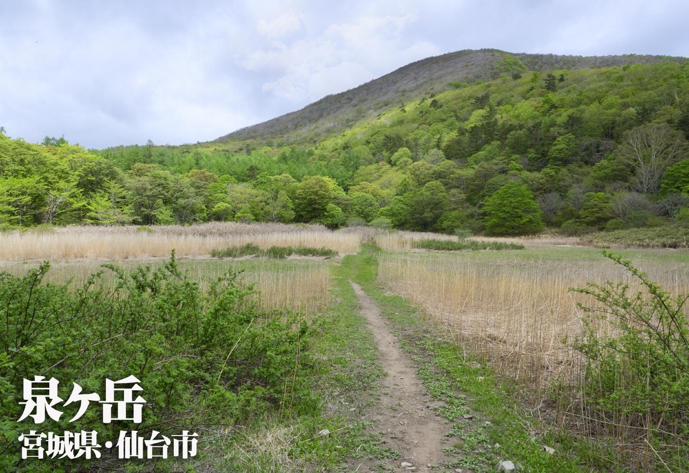 泉ヶ岳 ~宮城県・仙台市~ かもしか・滑降・表・水神コース